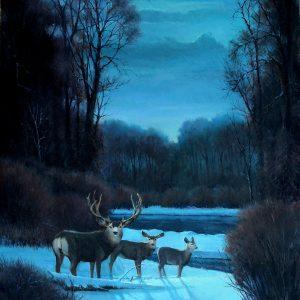 Mule Deer By Moonlight